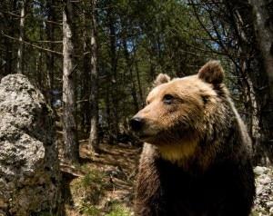 Photo of Parco Abruzzo, orso ucciso da un colpo di fucile