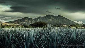 Photo of Meraviglie dal Messico: l'agave blu, il vulcano Tequila e Tapalpa
