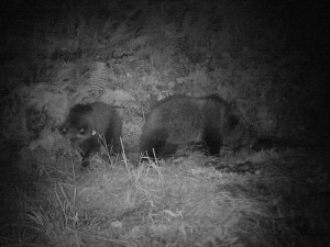 Photo of (English) Tutela orso bruno in Italia, l'opinione di Filippo Di Donato Presidente del Cai-Tam