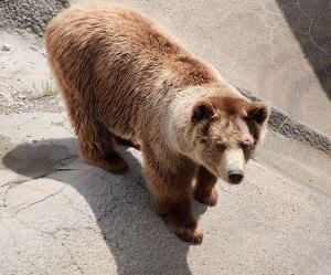 Photo of Trentino, orso investito nella Valle dei Laghi