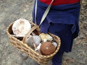 Raccoglitore di funghi (Photo courtesy of Ansa)