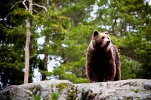 """Photo of Dopo il """"caso Daniza"""", a Bolzano un convegno sugli orsi e i lupi sulle Alpi"""