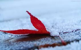 Photo of Inverni sempre più corti: dal 2050 la neve durerà tre settimane in meno