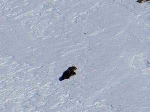 Photo of Avvistato un orso sul Monte Baldo: ecco le foto