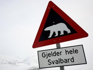 Photo of Svalbard, sciatore attaccato da un orso polare