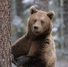 Photo of Trentino, escursionista incontra orso nei boschi: ferito