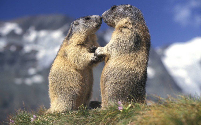 Photo of World Kiss Day: #sharethelove con Montagna.tv e partecipa al contest