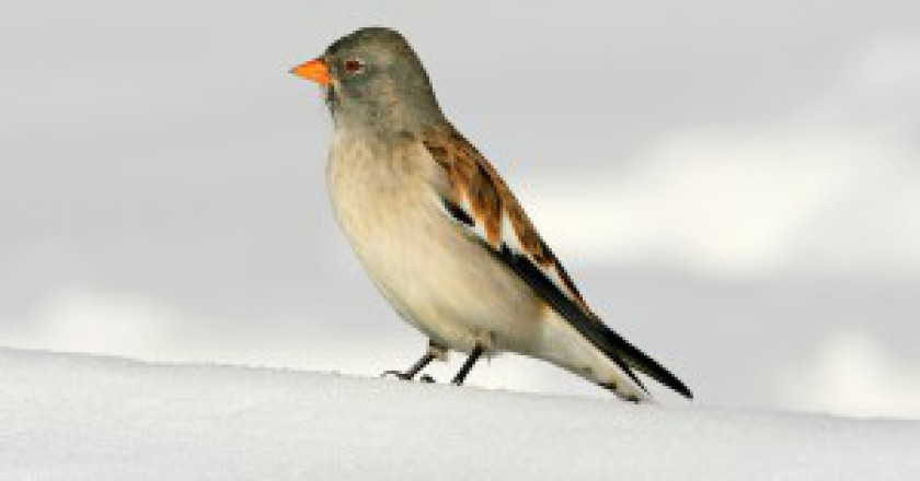 uccello-300x186.jpg