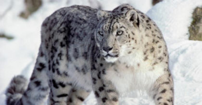snowl-300x207.jpg