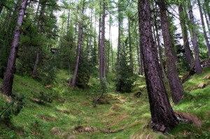 Photo of Disperso nei boschi di Oricola, è stato trovato e tratto in salvo