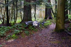 Drohne-erkennt-Waldweg-300x200.jpg