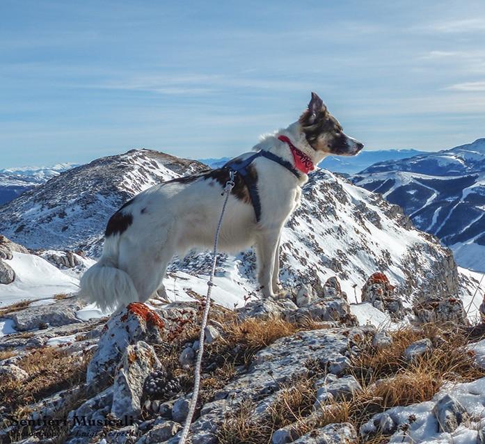 Photo of Un libro e i consigli per andare in montagna col proprio cane