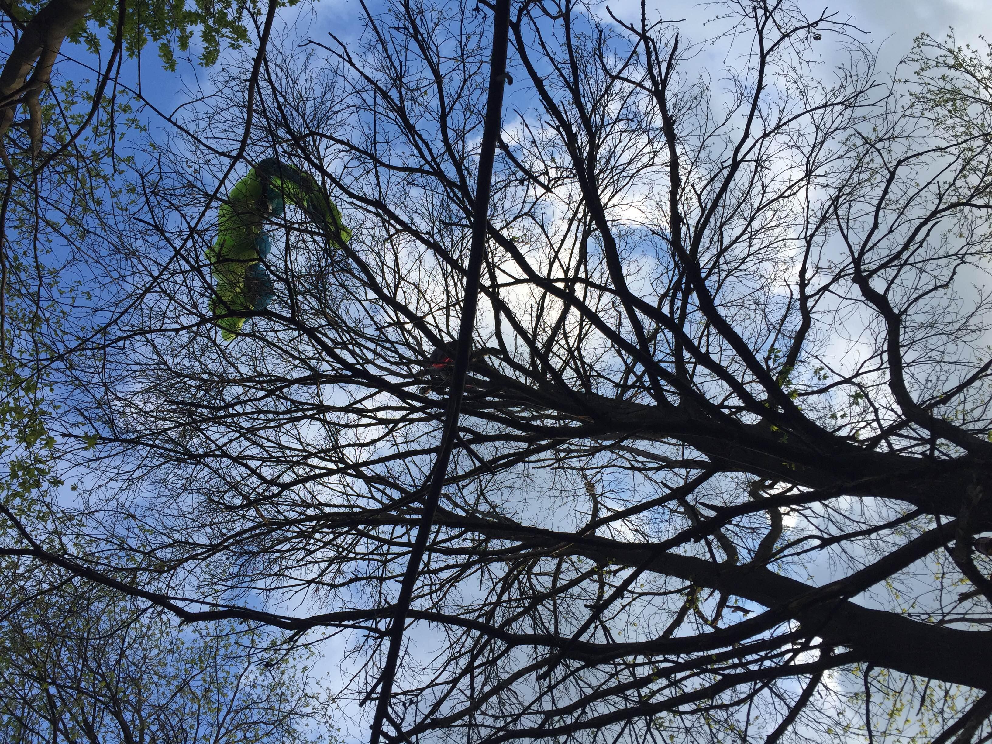 Photo of Con i ramponi sull'albero per recuperare il pilota di parapendio precipitato