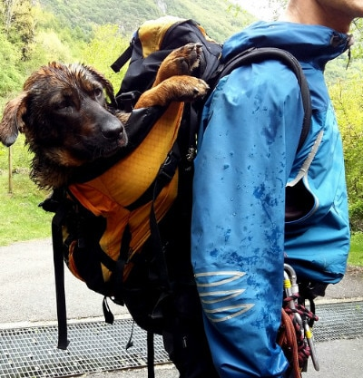 Photo of Salvata una cagnolina ferita nel Trevigiano