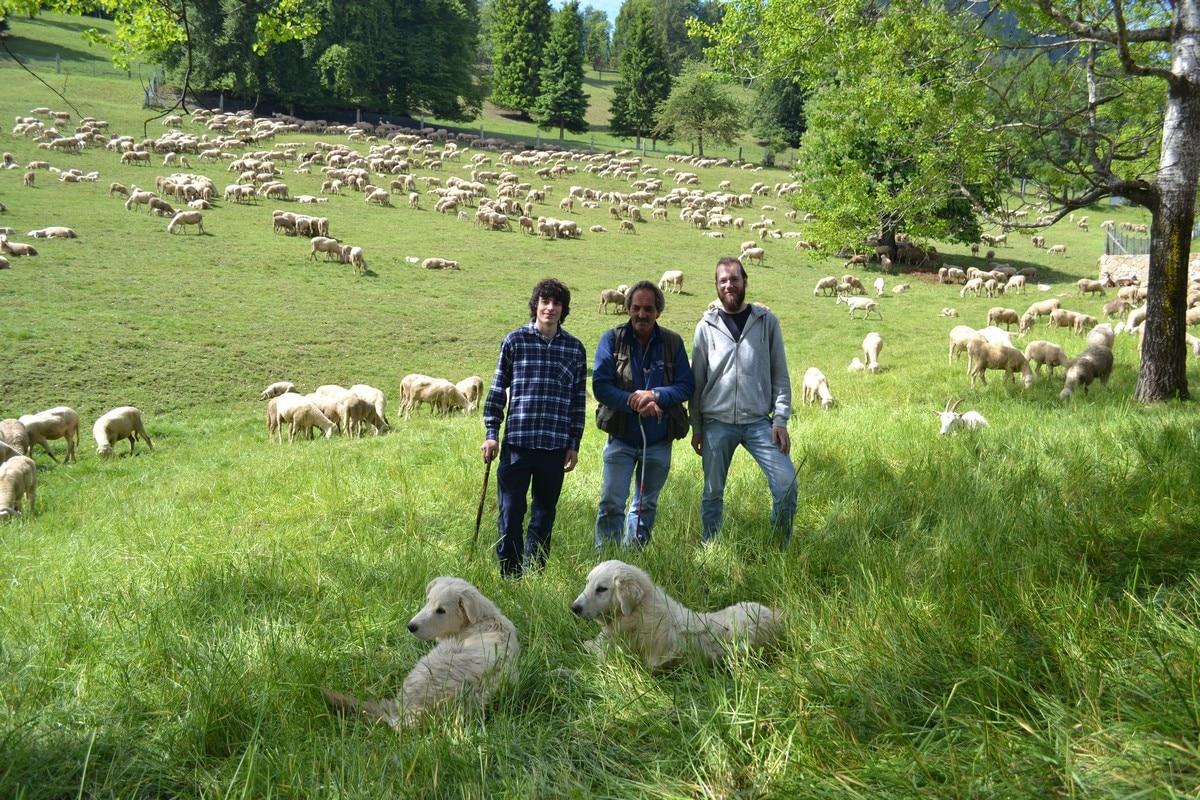 Photo of Ragazzi e pastori insieme per l'alpeggio