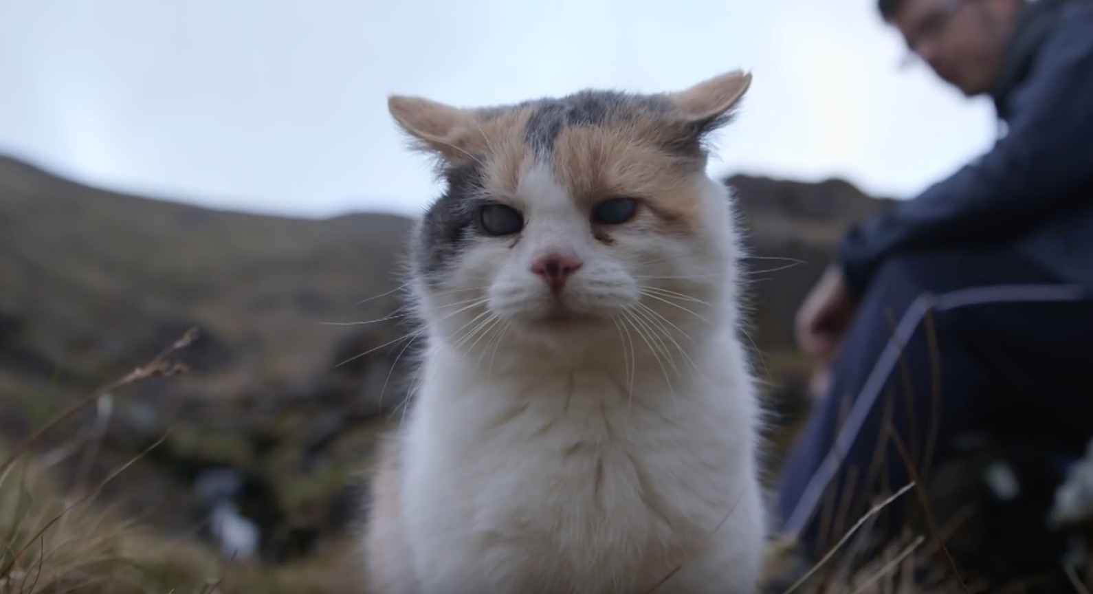 Photo of Stevie, la gattina cieca, che ha scalato la montagna più alta d'Irlanda