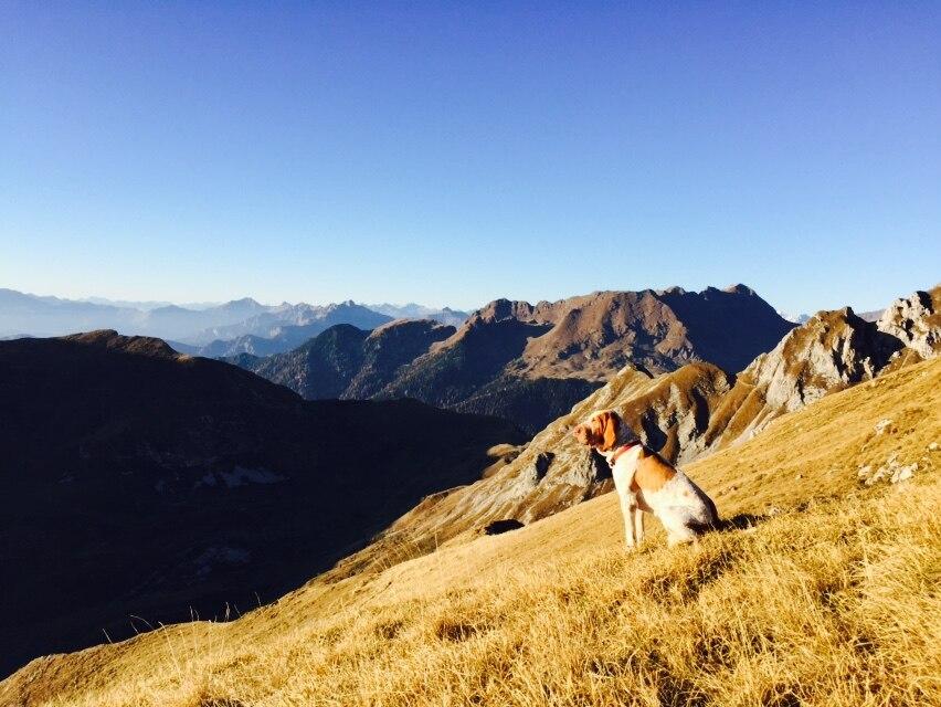 Photo of Rifugi alpini: fuori il cane!
