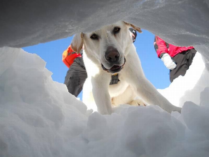 Photo of Max e il cane ideale