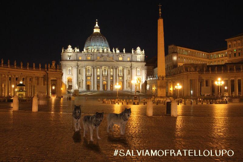 Photo of I lupi del Parco della Majella invadono il Vaticano