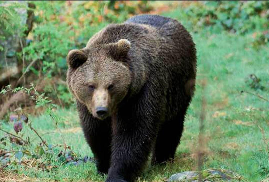 Photo of Chi ha paura dell'orso?