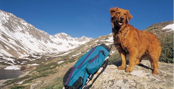 Photo of A proposito di Cani, Rifugi e CAI