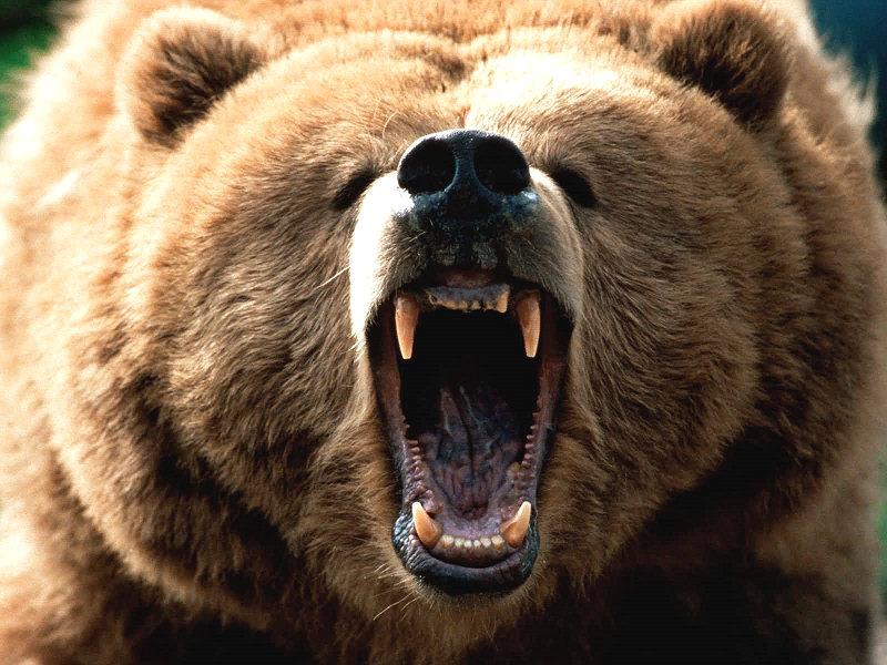 Photo of Trento, quando il vicino di casa è un orso
