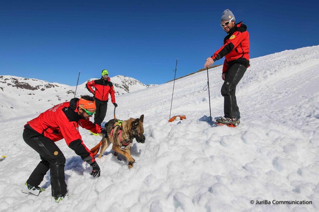 Photo of Compie 50 anni la scuola nazionale cani da valanga del CNSAS