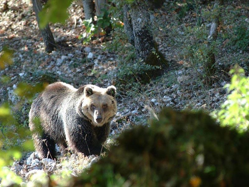 Photo of Abruzzo, coppia di orsi scende a valle