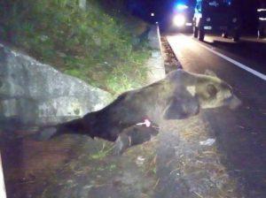 orso-ucciso-parco-nazionale-abruzzo-ottobre-2016-1-kkwf-u4324031267797fg-593x443corriere-web-roma