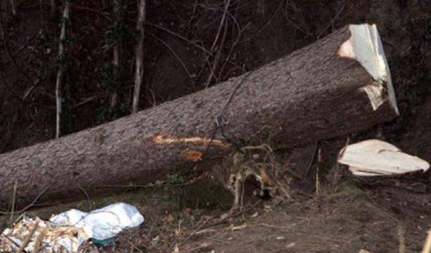 Photo of Boscaiolo perde la vita per i traumi riportati dopo essere stato colpito da un albero