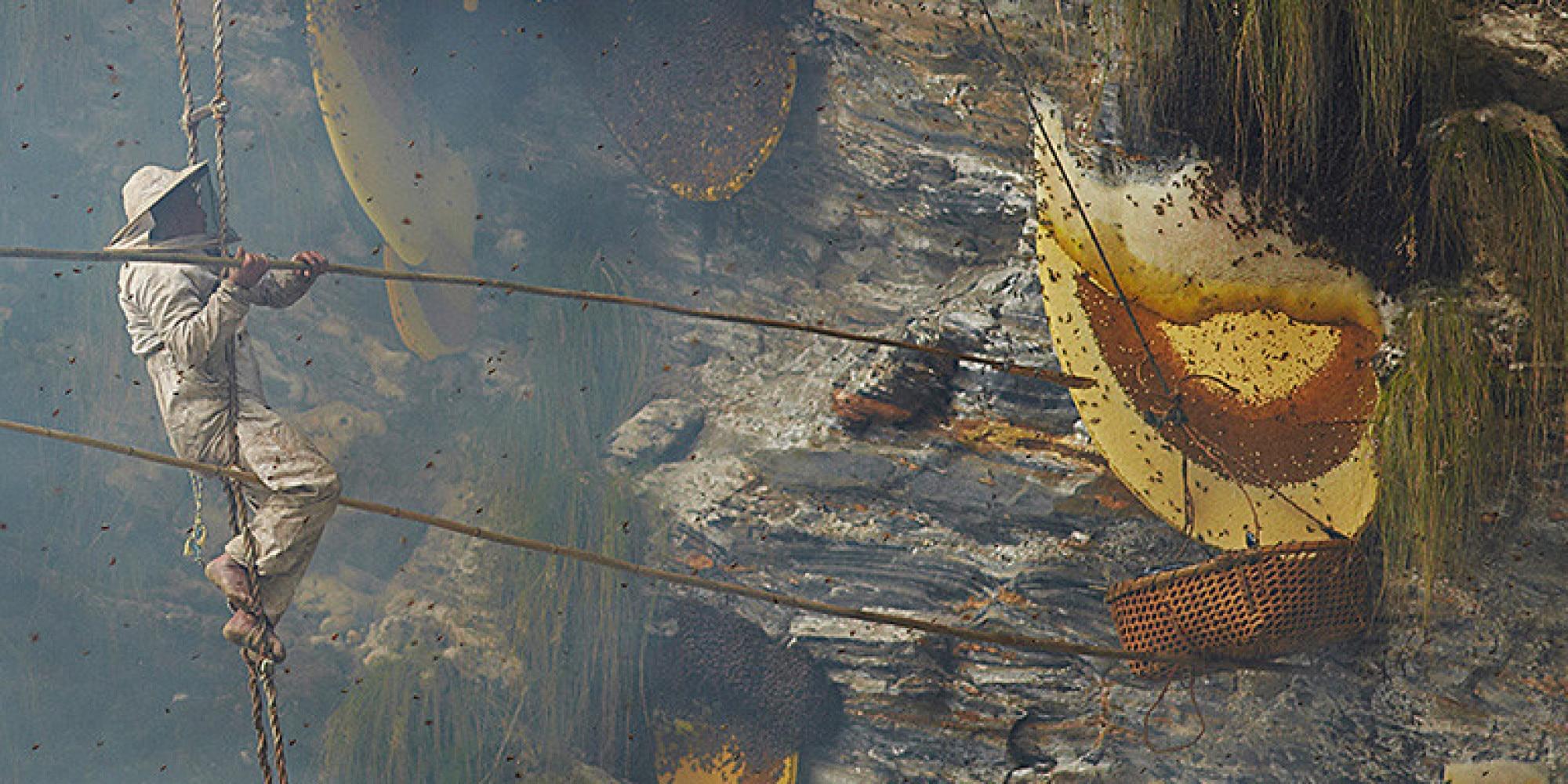 Photo of Le api italiane potrebbero essere introdotte in HImalaya