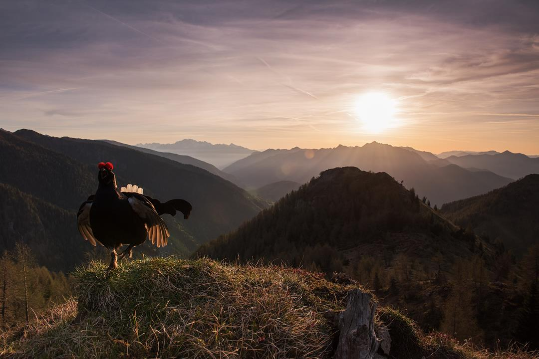 Photo of Fotografare il Parco, quattro parchi nazionali si aprono agli obiettivi degli appassionati