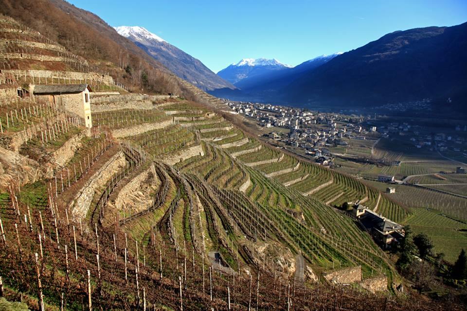 Photo of In vigore il Testo unico del vino che riconosce e tutela i vigneti eroici