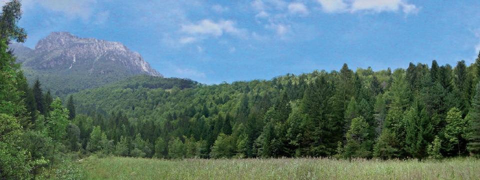 Photo of Crescono i boschi lombardi. Bergamo, Brescia e Sondrio in testa