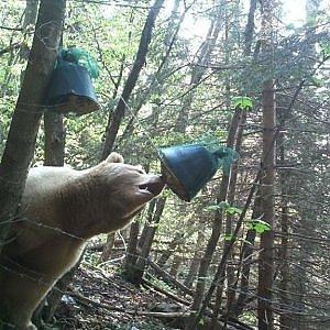Photo of La sveglia anticipata dell'orso Francesco