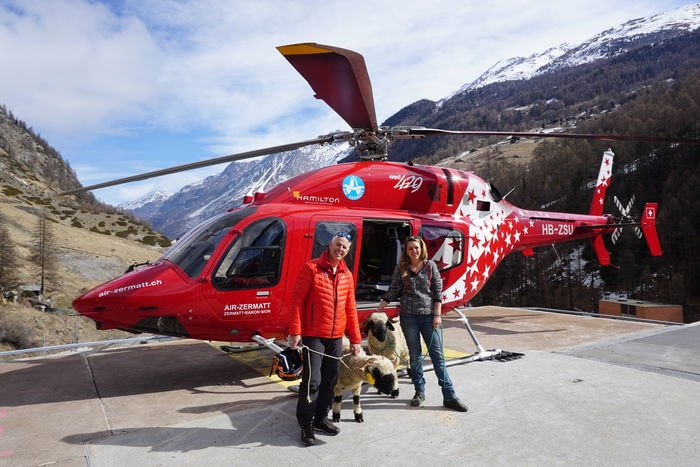 Photo of Pecore meglio dei cani per il Soccorso Alpino