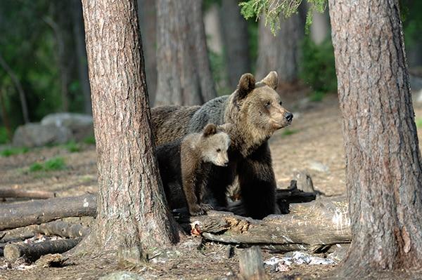 Photo of Incontro con un orso, le regole da seguire