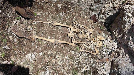 Photo of Dimenticato, il milite ignoto delle Dolomiti aspetta ancora il meritato riposo