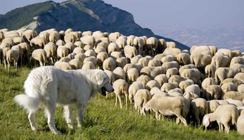 Photo of La Provincia di Trento finanzia i cani pastori contro i grandi carnivori