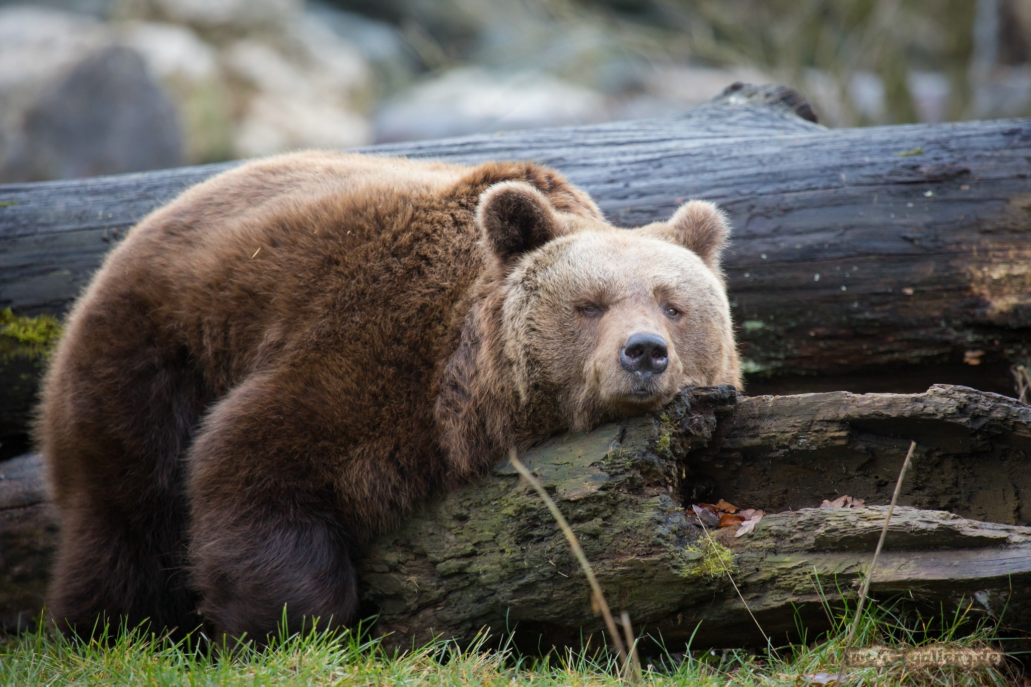 Photo of Se l'orso Krueger ti viene a prendere anche nei sogni