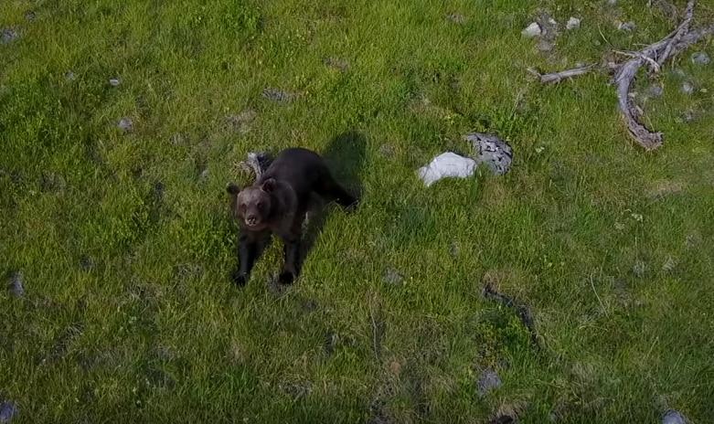 Photo of Un orso a spasso sulle Dolomiti: le riprese dal drone