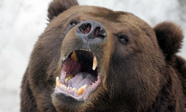 Photo of Non c'è più pesce e gli orsi affamati attacano l'uomo. E' emergenza in Russia