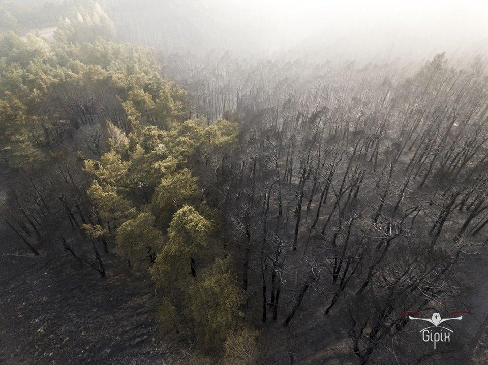 """Photo of """"Giornata nazionale degli alberi"""": un'occasione per parlare del patrimonio boschivo dopo l'emergenza incendi"""
