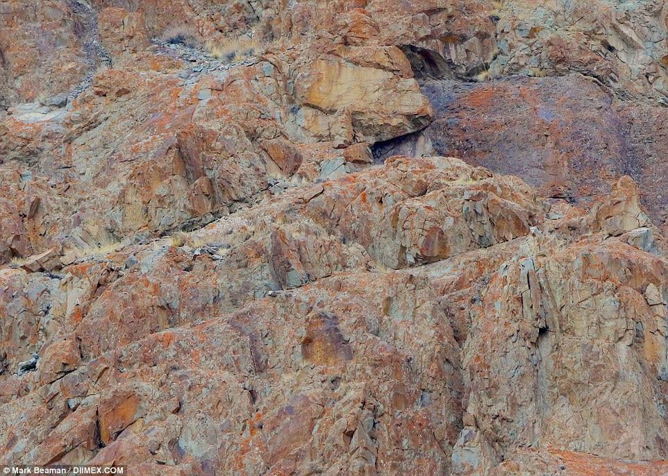 Photo of QUIZ: Il leopardo delle nevi c'è, ma non si vede! Riuscite a trovarlo?