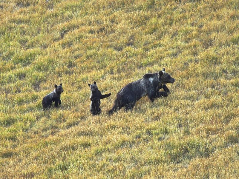 Photo of Nel 2017 sono nati ben 12 cuccioli di orso nel Parco Nazionale d'Abruzzo