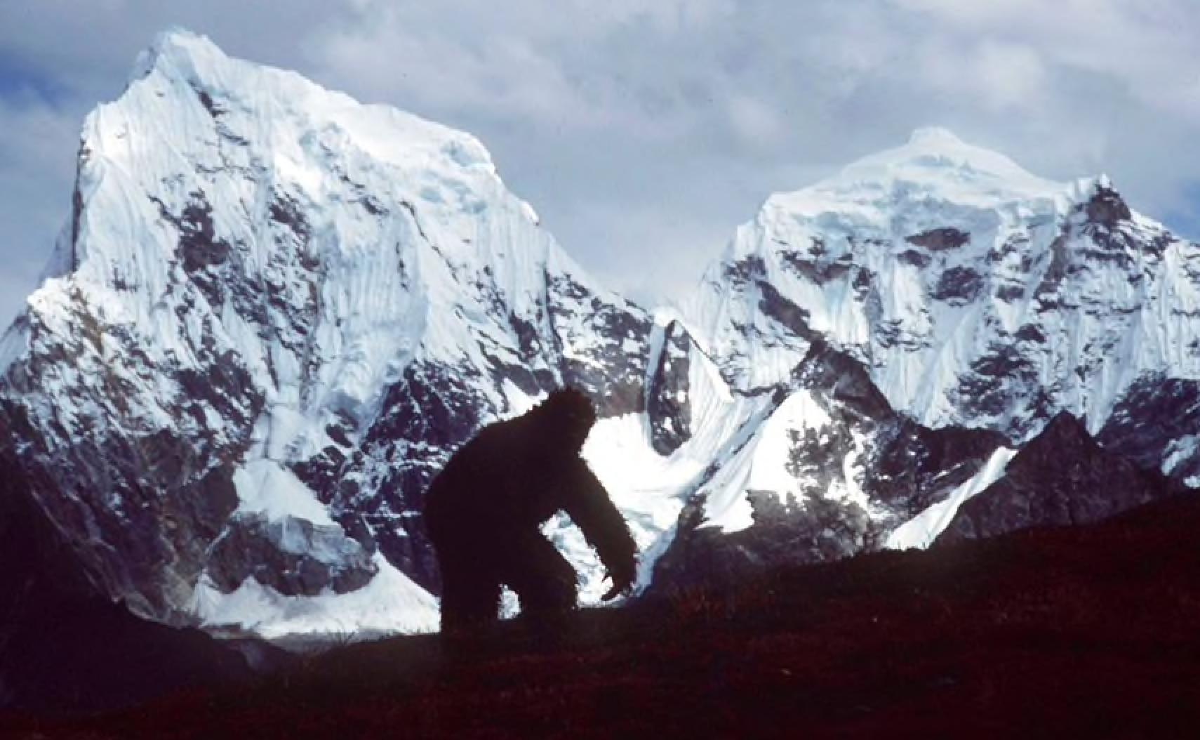 Photo of Lo zoologo Sandro Lovari: è improbabile che lo yeti esista, ma non impossibile