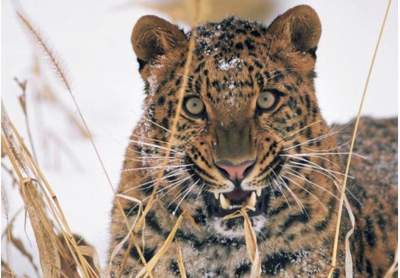 Photo of WWF: per 16 specie animali questo potrebbe essere l'ultimo Natale