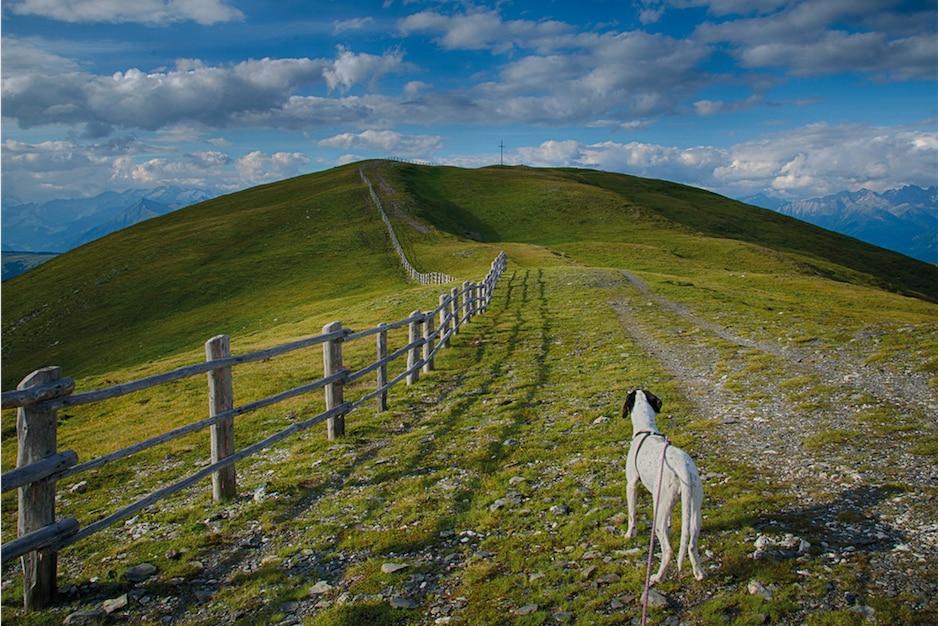 """Photo of """"Aspettami sulla cima"""", una storia d'amore tra un uomo, un cane e la montagna"""
