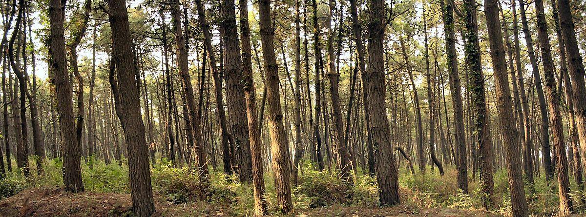 Photo of Nuova legge forestale: un assalto ai boschi italiani?