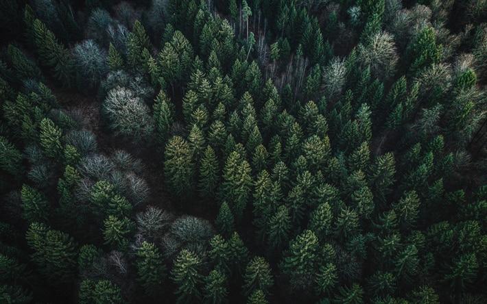 Photo of Enrico Borghi: basta castronerie sulla legge forestale
